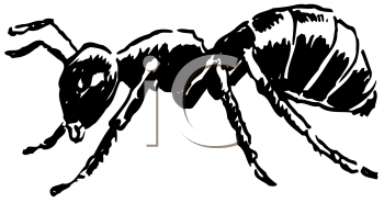 Royalty Free Clipart Image of an Ant