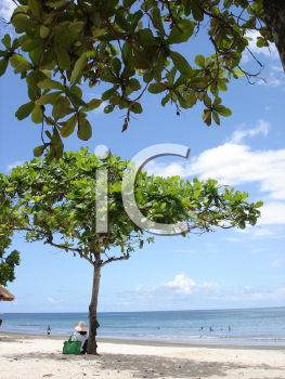 Royalty Free Photo of Trees on a Beach