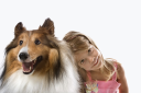 Royalty Free Photo of a Little Girl Sitting With a Collie Dog