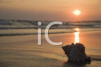 Royalty Free Photo of a Seashell on a Shoreline at Sunset