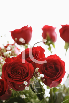 Royalty Free Photo of a Bouquet of Red Roses With Baby's Breath