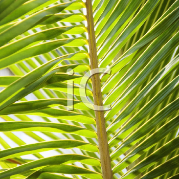 Royalty Free Photo of a Close-up of a Palm Frond