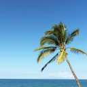 Royalty Free Photo of a Single Palm Tree Blowing in the Breeze With Ocean View in Maui, Hawaii