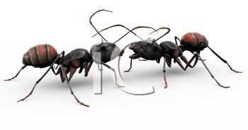 Royalty Free Clipart Image of two ants.