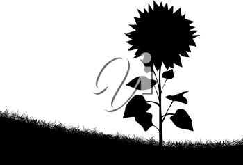Silhouette of a sunflower on the field of grass