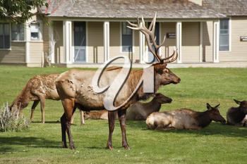 Royalty Free Photo of Deer in Yellowstone National Park