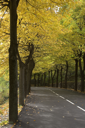 Highway, passing between autumn trees with yellow leaves