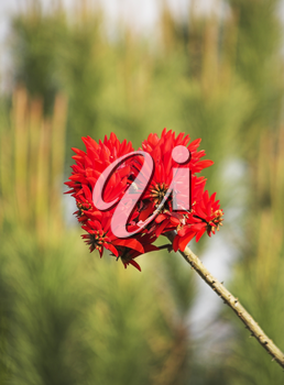 Red flower on the dim background of a green garden