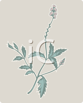 Royalty Free Clipart Image of a Wildflower