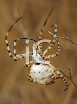 Royalty Free Photo of a Spider Closeup