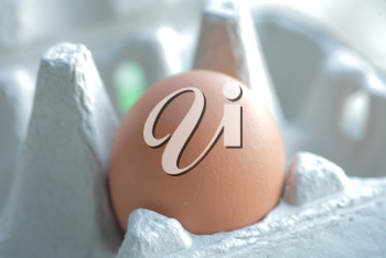 One brown egg in packing for eggs closeup