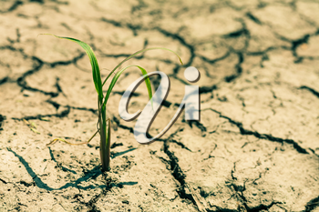 Small plant on cracked earth. Environmental problem concept