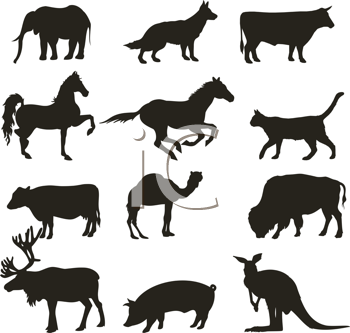 Abstract collection of  vector animals