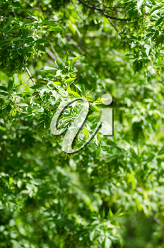 Photo of beautiful green leaves background. Selective focus