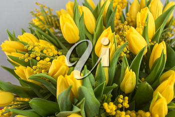 Bright spring bouquet of tulips and mimosa flowers. Mother's Day or Easter theme.