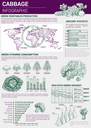 Cabbage vegetables vector sketch infographic. Graph and diagram elements for production, veggie vitamins consumption and wold map vegetarian consumer market analysis and information statistics chart