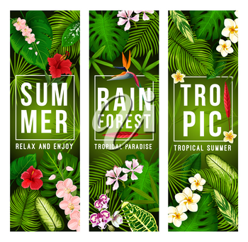 Tropical palm leaf and exotic jungle flower banner for summer holiday and beach vacation design. Hawaiian tree foliage of monstera and fern, hibiscus, orchid, plumeria and strelitzia floral poster