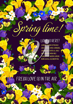 Spring time season greeting poster in floral frame. Blooming flower bunch of crocus, pansy, calla lily and jasmine branch, garden plant blossom and green leaf for Spring Holiday banner template design