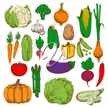 Green crunchy cabbages, cucumbers, cauliflower and asparagus, sweet corn, pumpkin, carrots and beet, ripe tomato, potato, eggplant and zucchini, juicy peas, peppers, onions and garlic, broccoli and ra