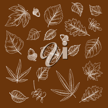 Autumnal fallen leaves and acorns chalk sketches with foliage and fruits of oak, maple, birch and cherry, palm, elm and poplar trees. Use as nature, ecology and season theme design