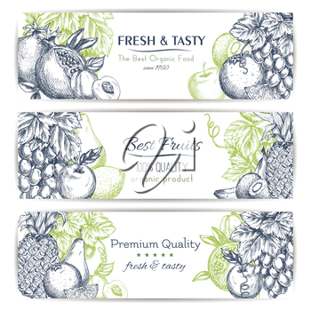 Fresh fruit sketch banner set. Tropical and garden fruits label with apple, orange, banana, grape, peach, pineapple, lemon, kiwi, pear and pomegranate with leaves and grapevine. Food and drink design