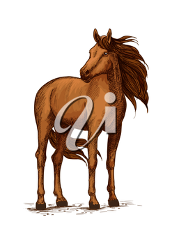 Stand of horse stallion or broodmare sketch. Mustang or domestic chestnut mammal, wild purebred animal with wavy mane and long tail, powerful hoof. Thoroughbred american racehorse symbol, equestrian h