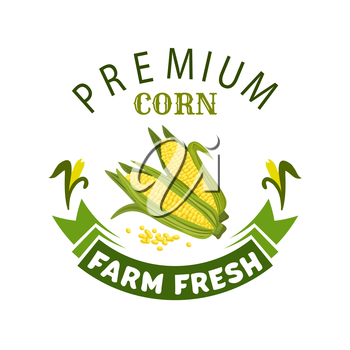Corn vegetable icon. Vector isolated emblem of farm fresh corncob or corn ear with leaves. Vegetarian and vegan cuisine vegetable and agriculture ripe harvest. Sweet corn cob maize for grocery store,