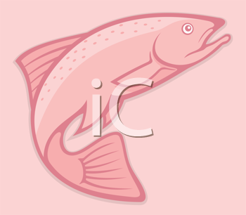 Royalty Free Clipart Image of a Salmon on Pink