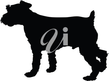 Royalty Free Clipart Image of a Schnauzer