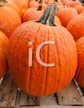 Royalty Free Photo of Pumpkins