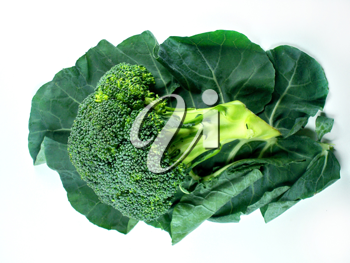 broccoli and Leaf on a white background