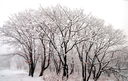 Beautiful landscape of winter forest