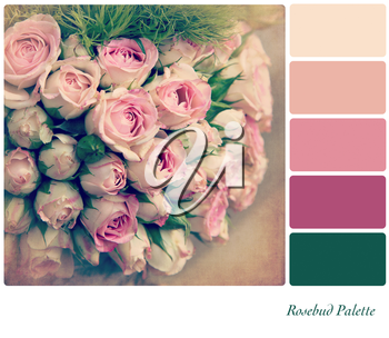 A background pale pink rosebuds in a colour palette,  with complimentary colour swatches. Textured retro style effect.