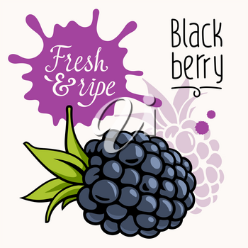 Vector illustration of ripe juicy blackberry. Concept for a farmers market. Idea for the label design. Organic, local grown product