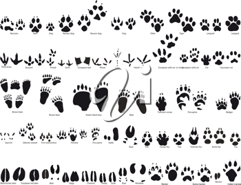 Royalty Free Clipart Image of Animal Traces