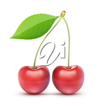 Vector illustration of two beautiful ripe red fresh cherries isolated on white background