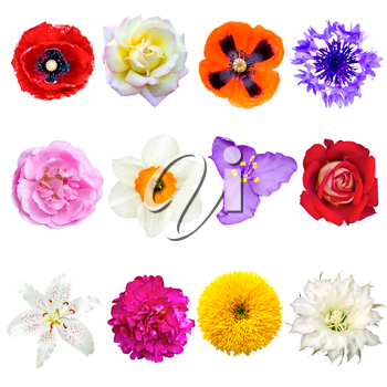 Set of Colorful Flowers Isolated on White Background