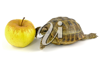 Royalty Free Photo of a Tortoise and an Apple