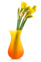 Bouquet from daffodil in a vase isolated on white background