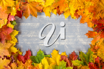 Grey wooden background with frame from colorful autumn leaves