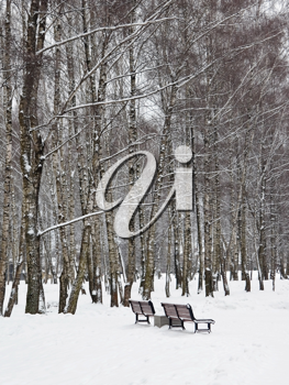 Snowy benches in winterpark