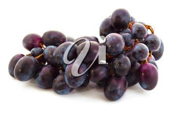 Blue grape on the white background