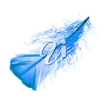 Blue plume or feather on white background