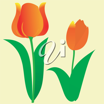 the colored simple abstract background with tulip