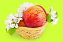 Red apples in a wicker basket with flowers of apple isolated on green background