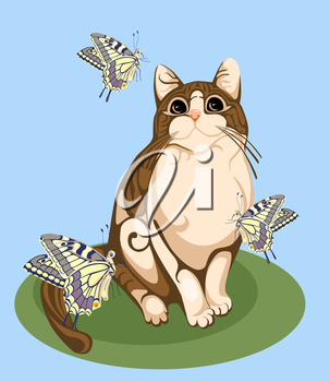 cat playing with butterflies
