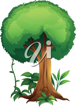 illustration of a tree on a white background