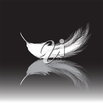 Royalty Free Clipart Image of a White Feather