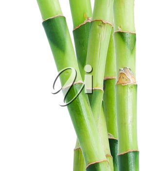 Royalty Free Photo of Bamboo Shoots