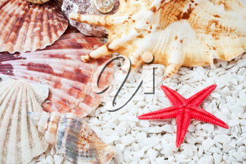 Background made from tropical seashells on sandy beach